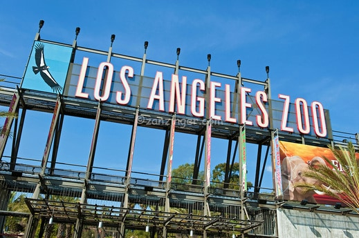 Best Zoos in California